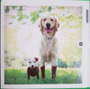 Picture of Card Blank -Muddy dog cards