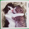 Picture of Card Blank -Cats hugging